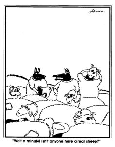 larson-wolf-among-sheep